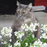 27-isabella-blomstene